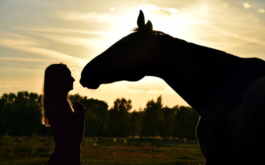 3 Tipps, wie du auf einfache Art und Weise die Beziehung zu deinem Pferd verbessern kannst